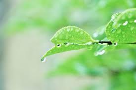 爽やかな雨と葉っぱ